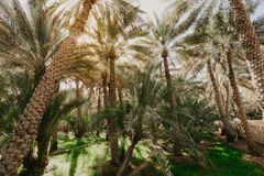Weergeven van de Unesco aangeworven oase in Al Ain, de V.A.E stock foto