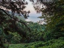 Weergeven van de zeekust met woningbouw door boomtakken royalty-vrije stock foto