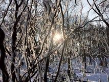 Weergeven van de zon door de snow-covered golvende builenwilg stock foto's