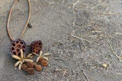 Weergeven van Droge Lotus Flower en Pijnboom op de cementvloer stock foto's