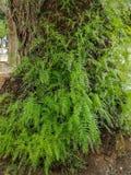 Weergeven van een boomstam met vele groene spruiten stock afbeelding
