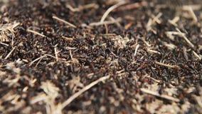 Weergeven van een mierenhoop bij de zonnige dag stock footage