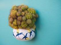 Weergeven van een pottenhoogtepunt van calochloracactus van Gymnocalycium Echinopsis stock foto's