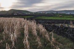Weergeven van Graan en Dierlijke Gebieden op Terceira-Eiland royalty-vrije stock afbeeldingen