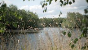 Weergeven van het bosmeer door de stelen van droog gras op de kust stock videobeelden