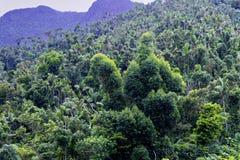 Weergeven van het Regenwoud royalty-vrije stock afbeelding