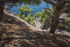 Weergeven van het steile pijnboombos die het overzees overzien stock fotografie