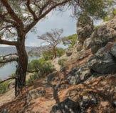 Weergeven van het steile pijnboombos die het overzees overzien stock foto's