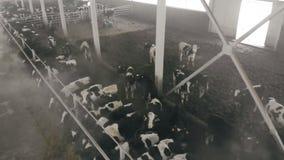 Weergeven van hierboven van een cowhouse met vee stock videobeelden