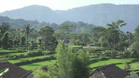 Weergeven van hommel op rijstterrassen van berg en huis van landbouwers Bali, Indonesië stock footage