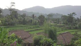 Weergeven van hommel op rijstterrassen van berg en huis van landbouwers Bali, Indonesië stock videobeelden