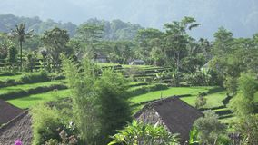 Weergeven van hommel op rijstterrassen van berg en huis van landbouwers Bali, Indonesië stock video