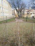 Weergeven van knoppen van struiken en de lentepark stock afbeelding