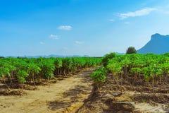 Weergeven van maniokgebied stock afbeeldingen