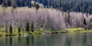 Weergeven van Marlette-Meer in Meer Tahoe royalty-vrije stock foto's
