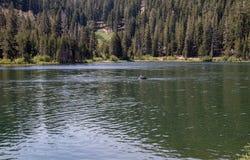 Weergeven van Marlette-Meer in Meer Tahoe stock afbeelding