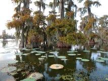 Weergeven van Meer Martin, Louisiane stock afbeelding