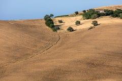Weergeven van olijfgaarden en landbouwbedrijven op rollende heuvels van Abruzzo royalty-vrije stock afbeeldingen