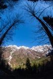 Weergeven van pas Vrsic hoewel bomen aan het Scheermes van bergenskrlatica royalty-vrije stock fotografie