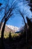 Weergeven van pas Vrsic hoewel bomen aan het Scheermes van bergenskrlatica stock foto's