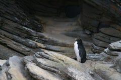 Weergeven van pinguïn tegen rotsachtige achtergrond stock afbeeldingen