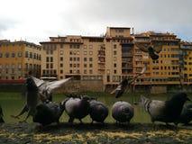 Weergeven van Rivier Arno met duiven in de voorgrond, Florence, Italië stock foto