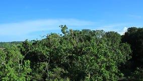 Weergeven van tropisch regenwoud over de boomkroon stock videobeelden