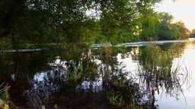 Weergeven van Vijver met Overhangende Boom en Bezinningen over Water Oever van het meeroverhangend gedeelte met Duidelijke Waterb stock videobeelden