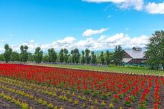 Weergeven van volledige bloei kleurrijk veelvoudig soort bloemen stock foto's