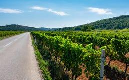 Weergeven van wijngaarden door de weg op het Eiland Vis in Kroatië, Europa, op een de zomerdag stock foto