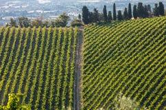 Weergeven van wijngaarden en landbouwbedrijven op rollende heuvels van Abruzzo royalty-vrije stock foto's