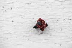 Weergeven vanaf bovenkant bij persoon die tijdens de winter lopen stock afbeelding