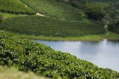 Weergevenlandbouwbedrijf met de bebouwing van de koffieaanplanting stock afbeelding