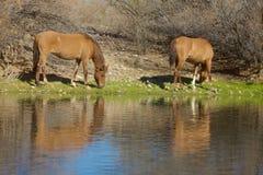 Weerspiegelde wild paarden Royalty-vrije Stock Afbeelding