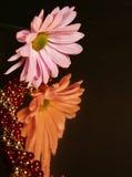 Weerspiegelende Daisy Royalty-vrije Stock Afbeeldingen