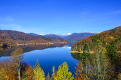 Weerspiegeling van de herfst Bladeren van de herfst vielen in water Stock Afbeeldingen