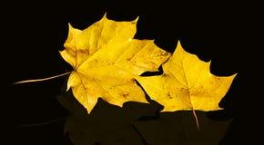 Weerspiegelingen van de herfst stock afbeelding