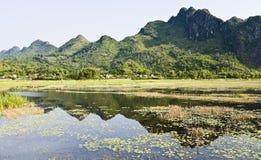 Weerspiegelingen van Van Long Natuurreservaten Stock Foto's
