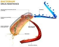 Weerstand van bacteriën tegen antibiotica Stock Foto