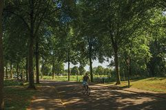 Man riding bicycle on a street in the shade of leafy trees at sunset in Weesp. Weesp, northern Netherlands - June 23, 2017. Man riding bicycle on a street in Stock Image