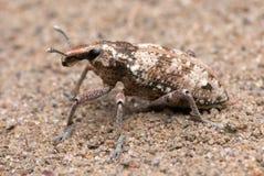 Weevil stock photo