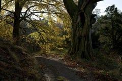 Weg 2 van de herfst Stock Afbeelding