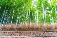 Weg aan bamboebos in Arashiyama in Kyoto royalty-vrije stock foto's