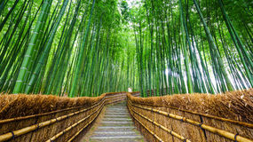 Weg aan bamboebos, Arashiyama, Kyoto, Japan royalty-vrije stock afbeeldingen