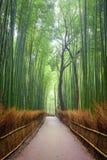 Weg aan bamboebos, Arashiyama, Kyoto, Japan stock afbeeldingen
