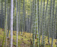 Weg aan bamboebos, Arashiyama, Kyoto, Japan Trillende ochtend royalty-vrije stock afbeeldingen