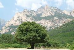 Weg aan Bavella-heuvel op het Eiland Corsica Stock Foto