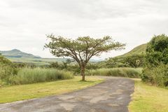 Weg aan begin van Tugela-Kloof wandelingssleep in Drakensberg Royalty-vrije Stock Afbeelding