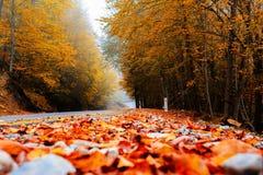 Weg aan de herfst royalty-vrije stock afbeelding