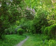 Weg aan de mooie de lentetuin stock fotografie